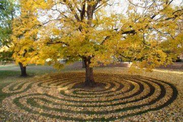 What Is Google Gold gardening